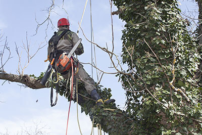 How Good Tree Trimming In San Antonio Is Important